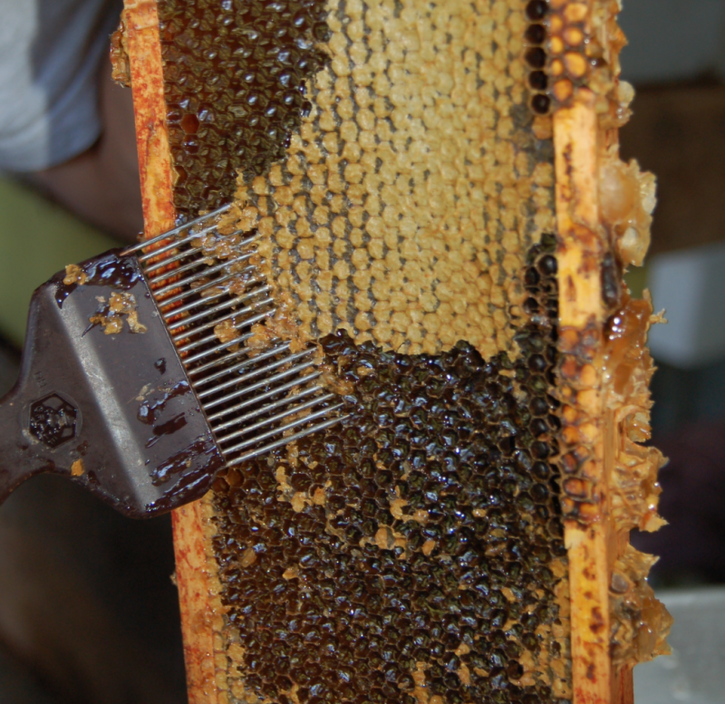 africanized honey bee hive