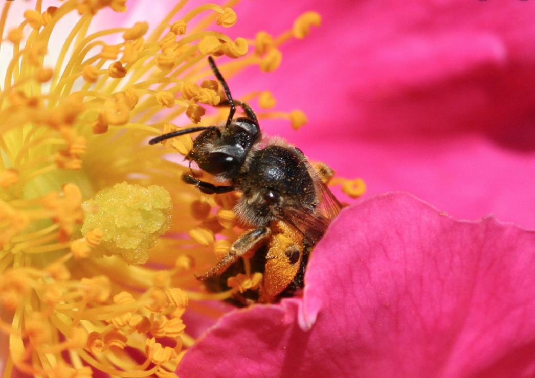 Finding A Bee Exterminator