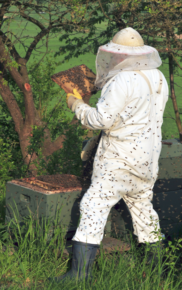 How to Safely Remove Bee Hive in Your Property
